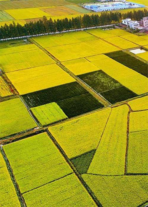 农场信息化解决方案